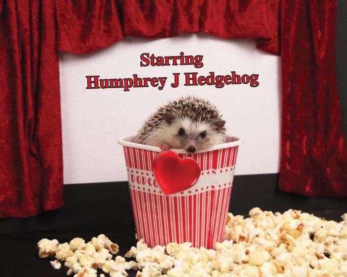 Приключения Хамфри Дж Hedgehog