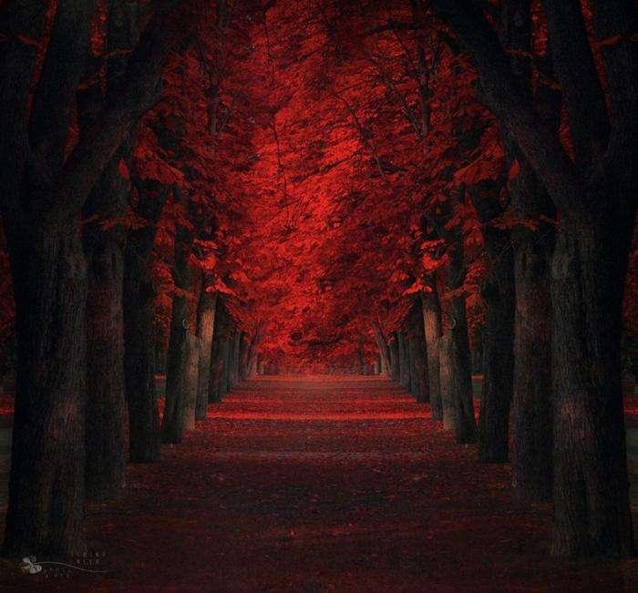 Самые красивые деревья в мире