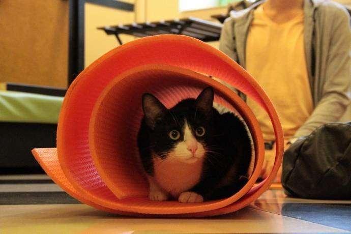 В казанском котокафе устроили йогу с котами