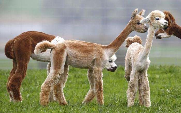 Животные из выпусков новостей